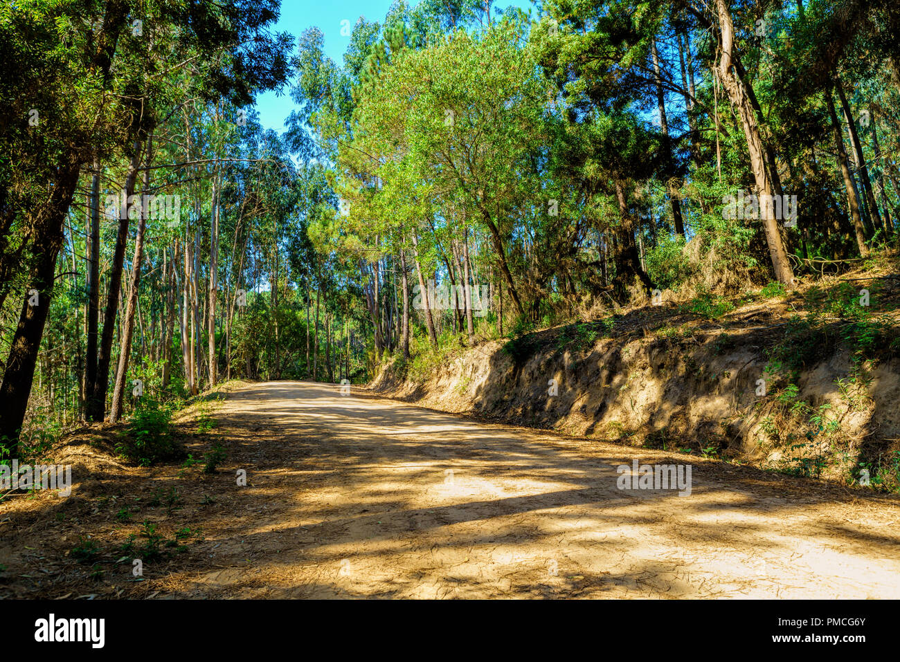 Curved dirt road in the midst of eucalyptus forest  . Sintra Portugal Stock Photo