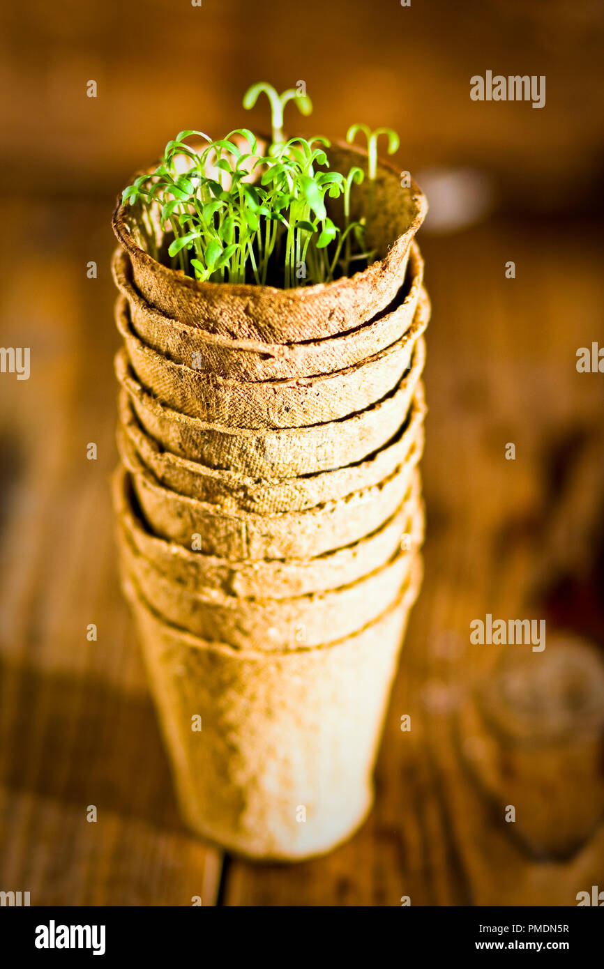Potted Moss Stock Photos & Potted Moss Stock Images - Alamy