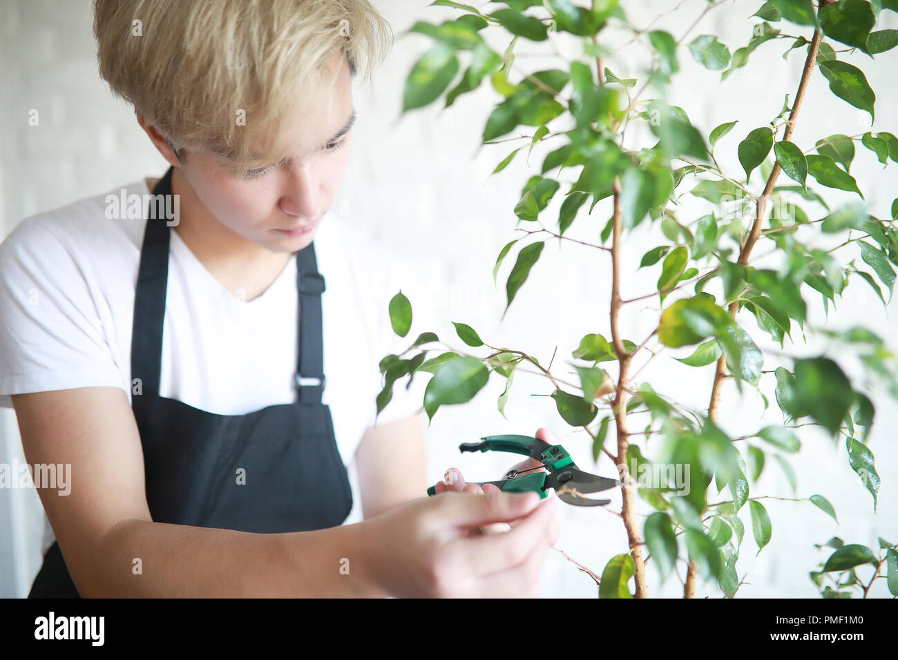 Young Asian boy takes care of indoor plants - Stock Image