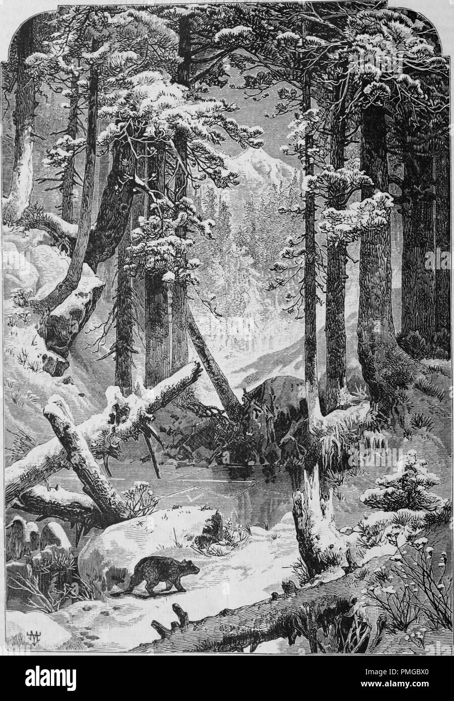 Engraving of a winter forest in the Sierra Nevada Mountains, from the book 'The Pacific tourist', 1877. Courtesy Internet Archive. () - Stock Image