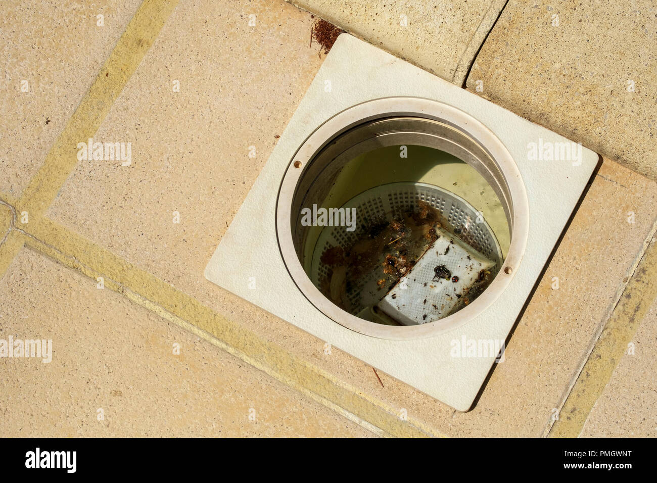 Swimming pool maintenance - a skimmer basket ful of debris and dead insects - Stock Image