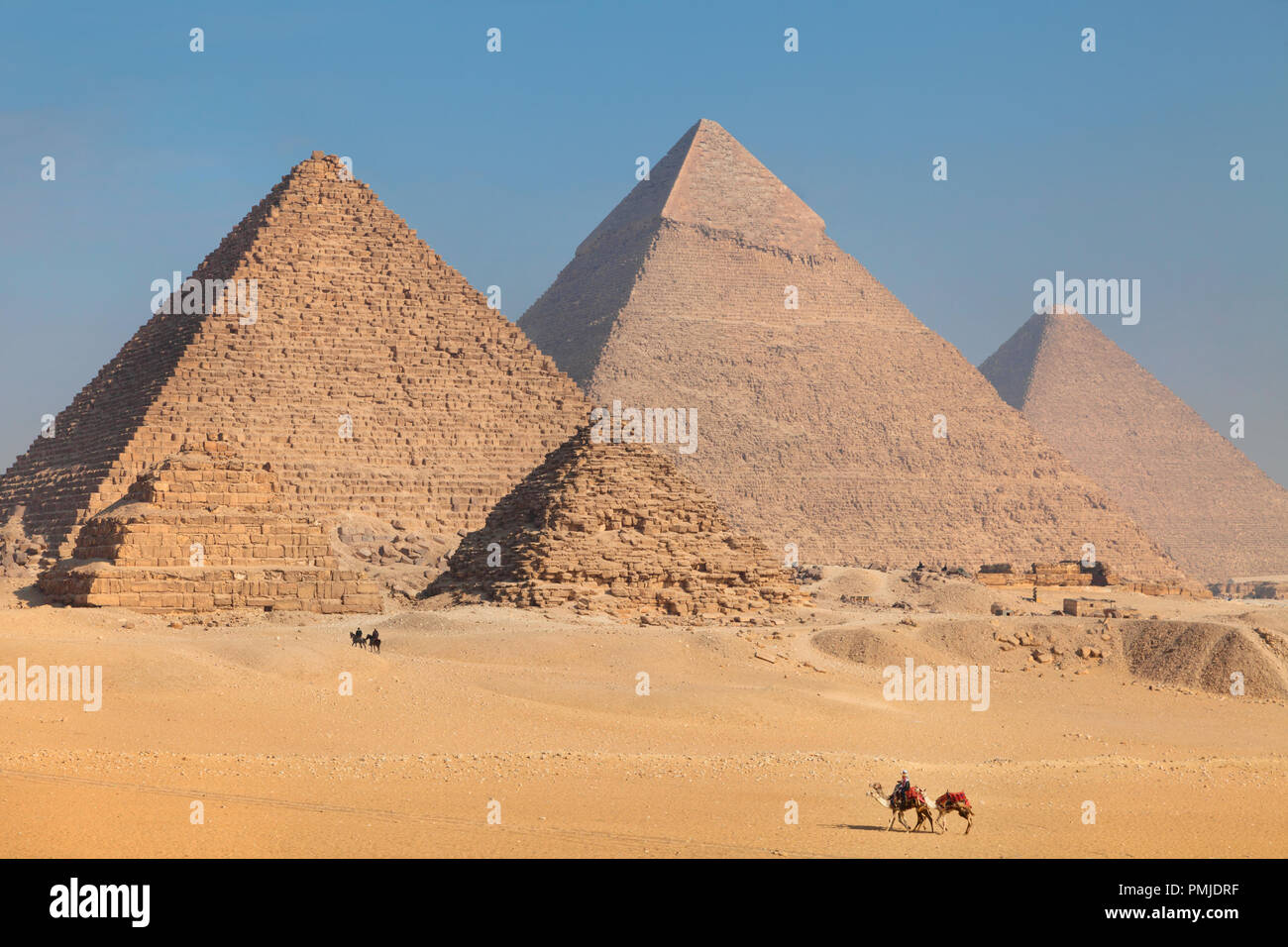 Camels walks through the desert sand on Giza Plateau near the Great Pyramids of Egypt - Stock Image