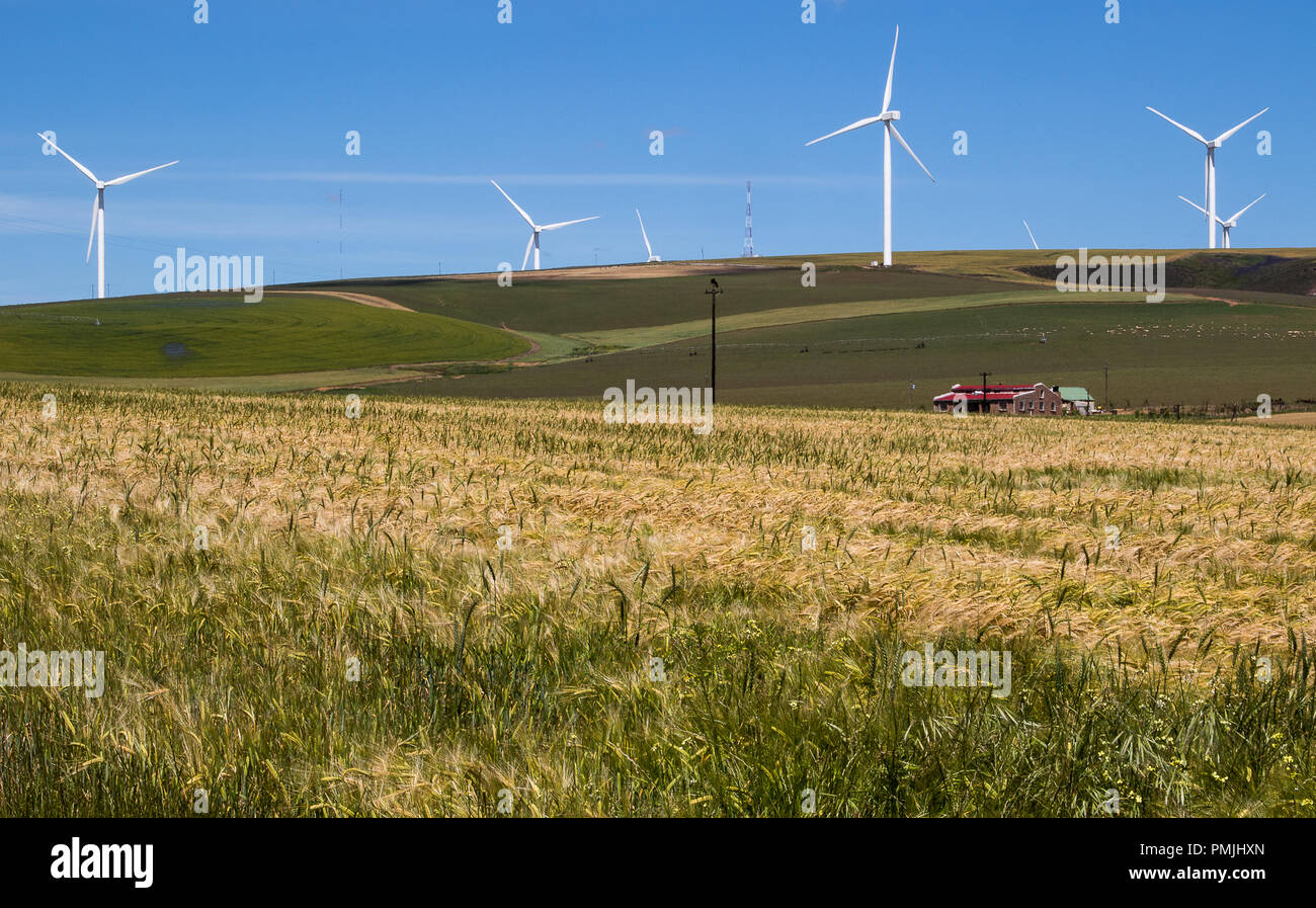 Agriculture and production of renewable energy in the Western Cape province of South Africa - Stock Image