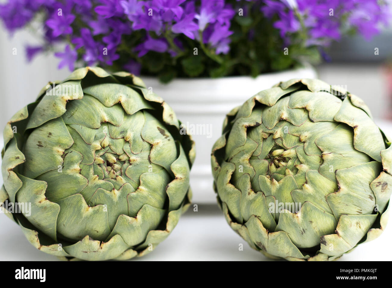 Two artischokes lying on a white surface. Background blurred out purple summer flowers. - Stock Image
