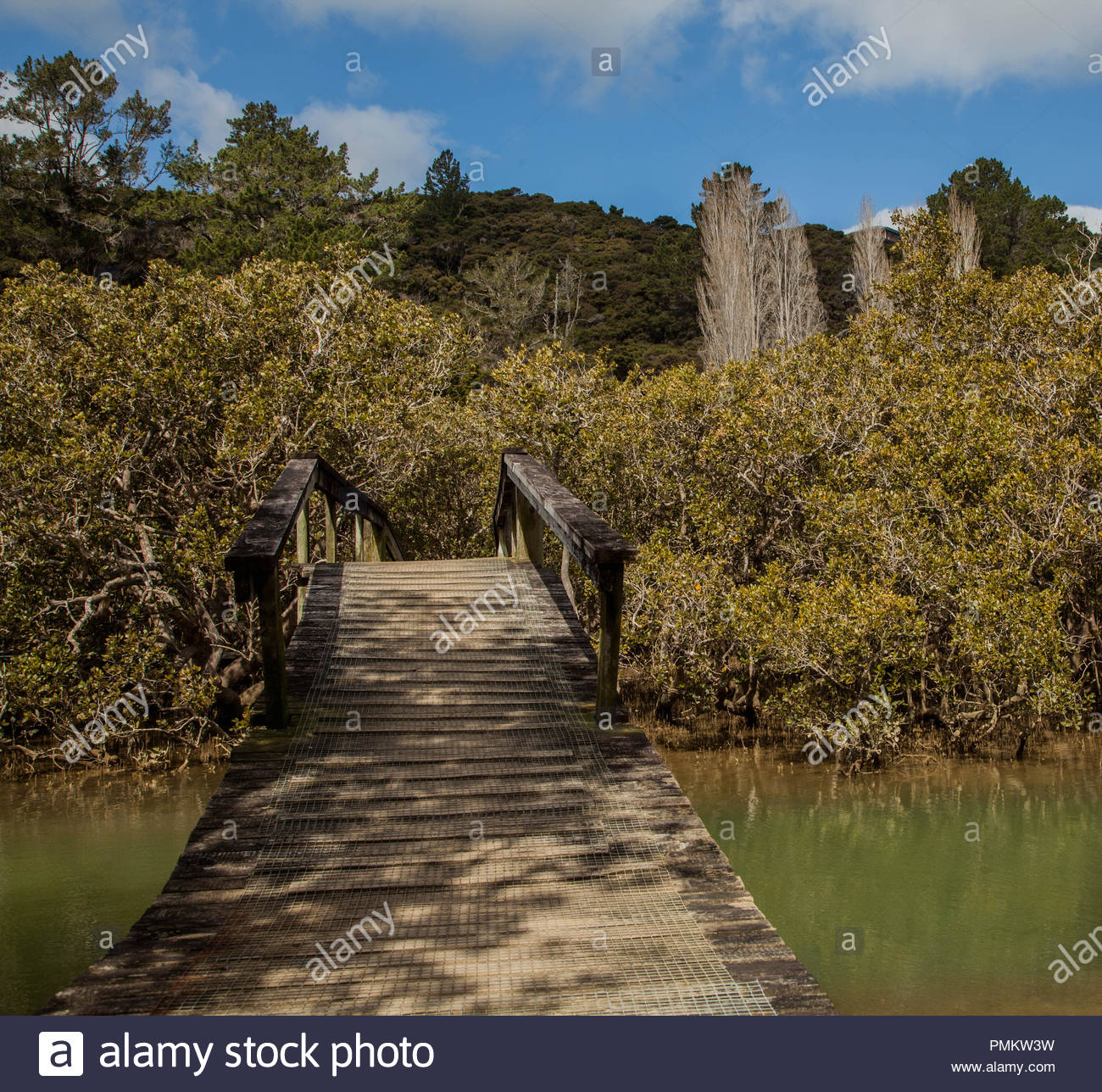 Mangroves at Te Haumi New Zealand 18 October 2018 - Stock Image