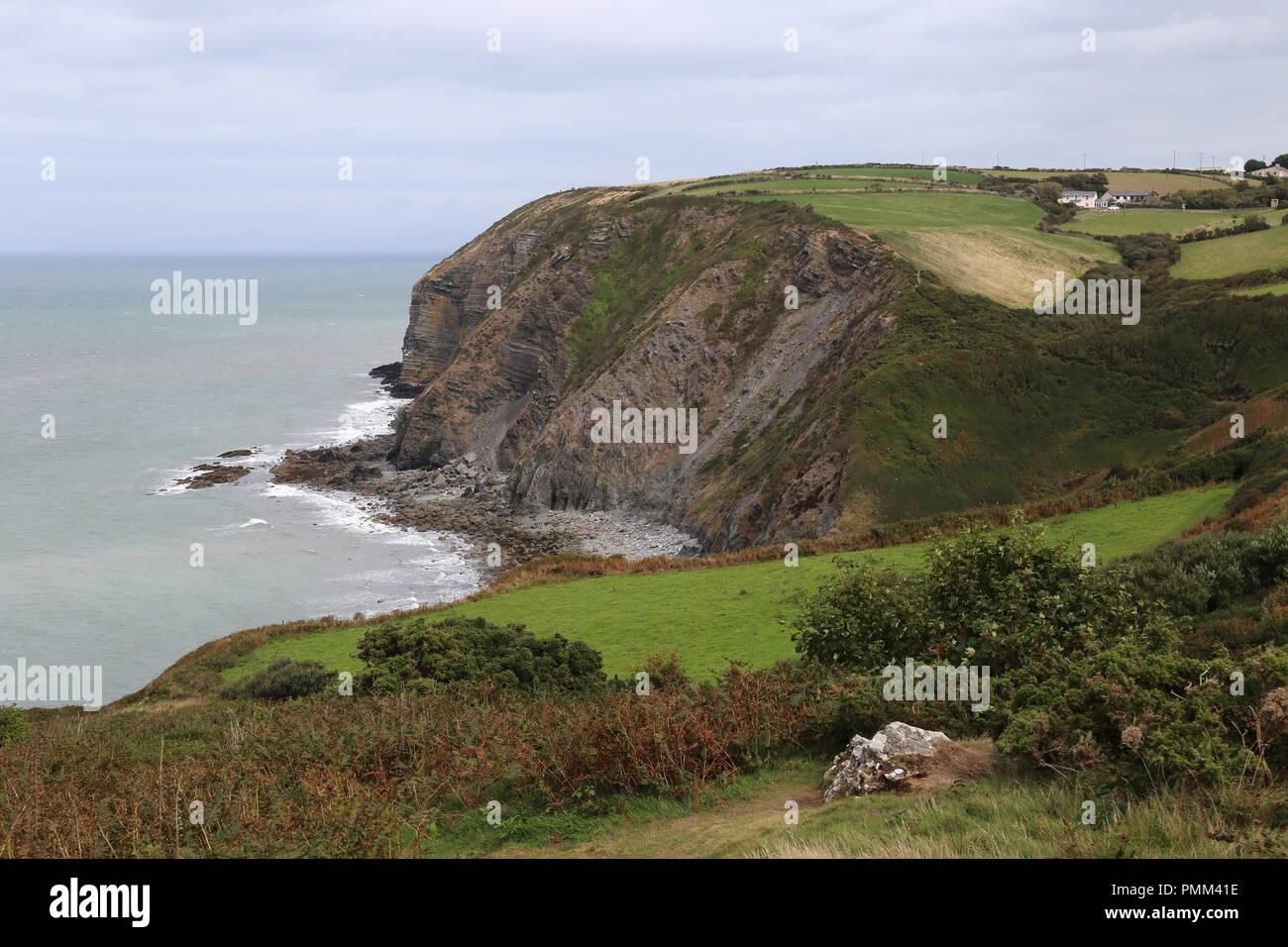 Coast Path at Craig Coubal between New Quay and Cwmtydu, Cardigan Bay, Ceredigion, Wales, Great Britain, United Kingdom, UK, Europe - Stock Image