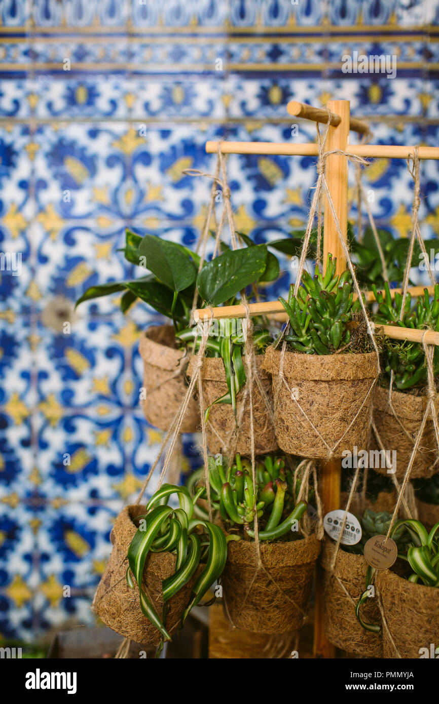 Green Plants And Succulents Displayed In Eco Pots Hanging On A Stand On A Market Stall Against A Background Of Azulejo Tiles In Soft Focus Stock Photo Alamy