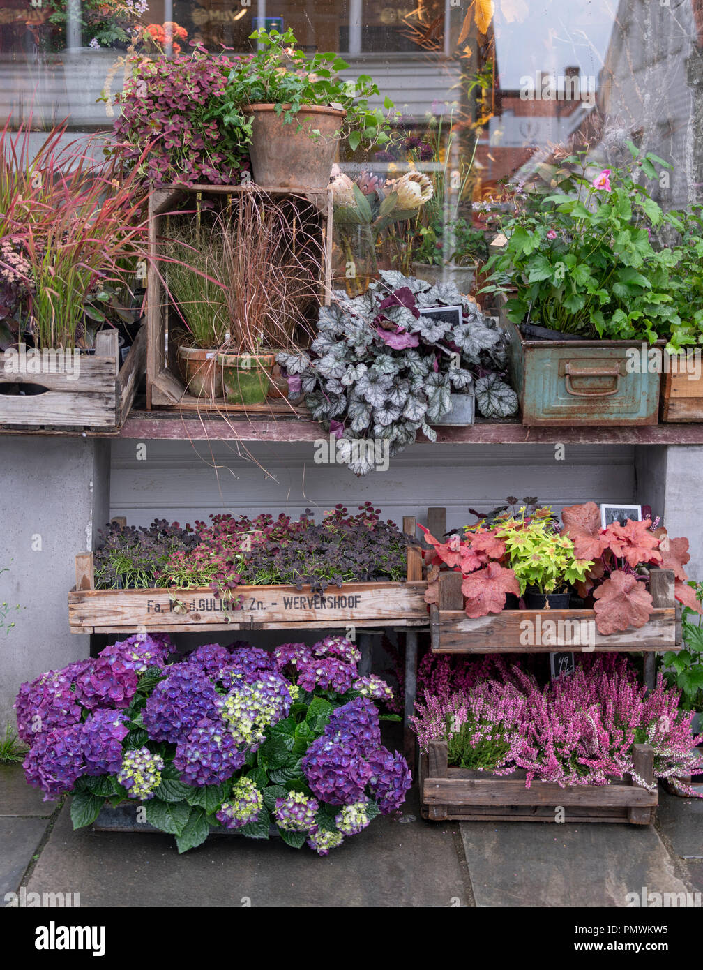 Autumn Plants And Flowers For Sale Outside Florist Shop In