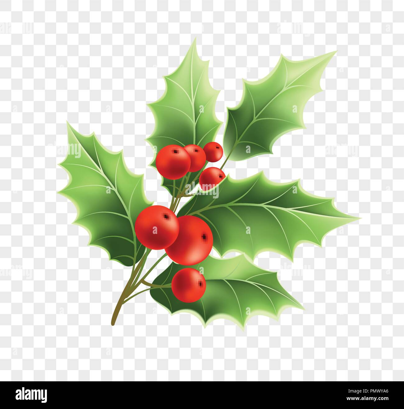 Christmas holly twig realistic illustration - Stock Vector
