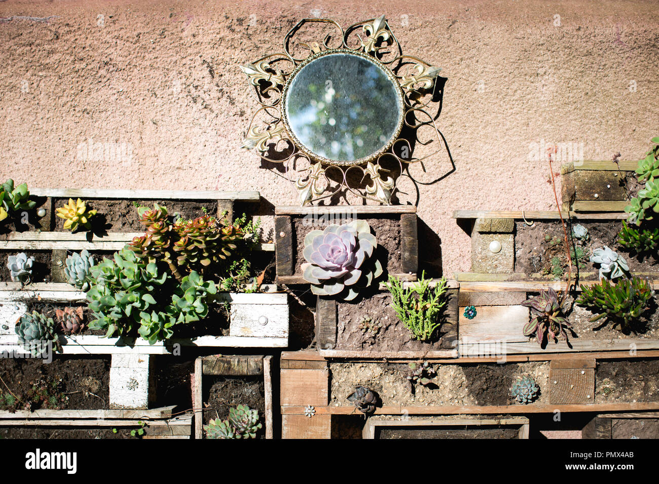 A homemade living wall made from boxes and crates stacked together to create an unique urban garden with succulents and alpines and a round mirror - Stock Image