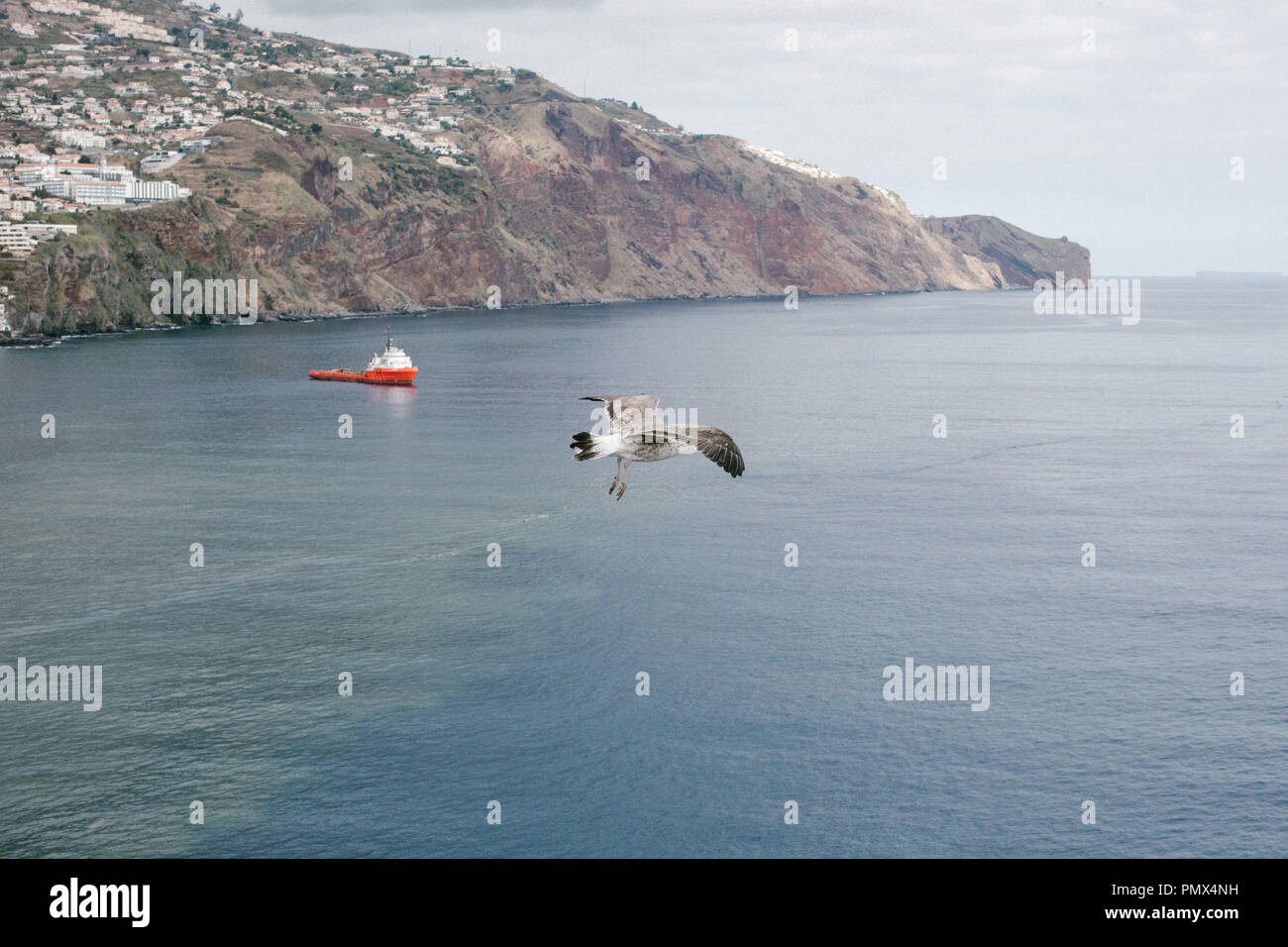 Sea birds (seagulls) flying high up over a calm blue sea with a boat below and the coastline in the background - Stock Image