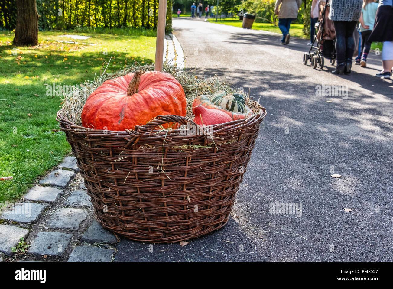 Squashes outdoors stock photos squashes outdoors stock - Botanic gardens pumpkin festival ...