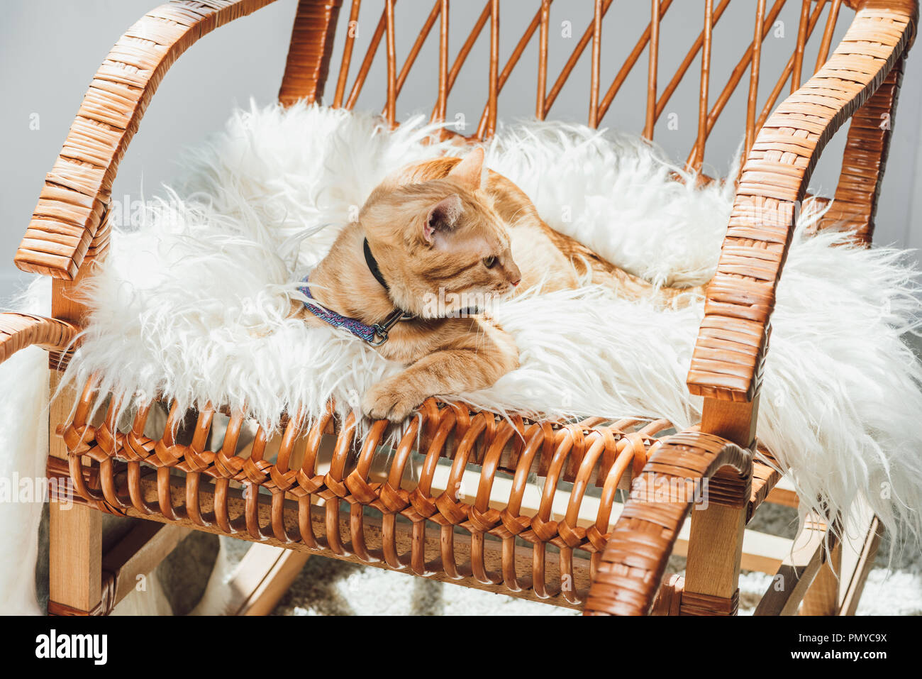 Fantastic Cute Domestic Tabby Cat Lying On Rocking Chair In Living Creativecarmelina Interior Chair Design Creativecarmelinacom