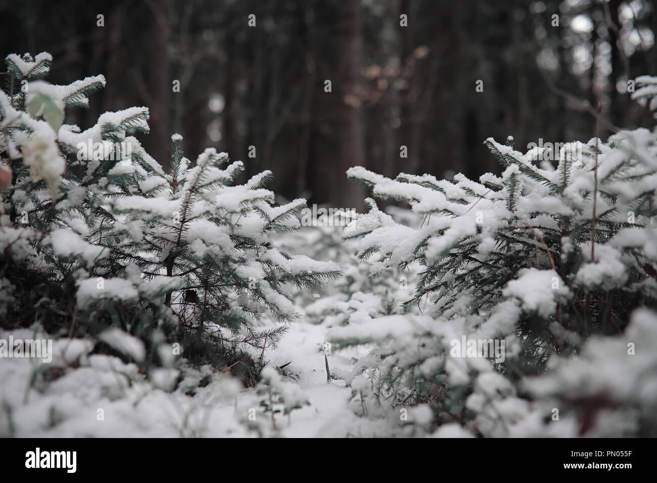 snow whiteside, mo - HD1300×956