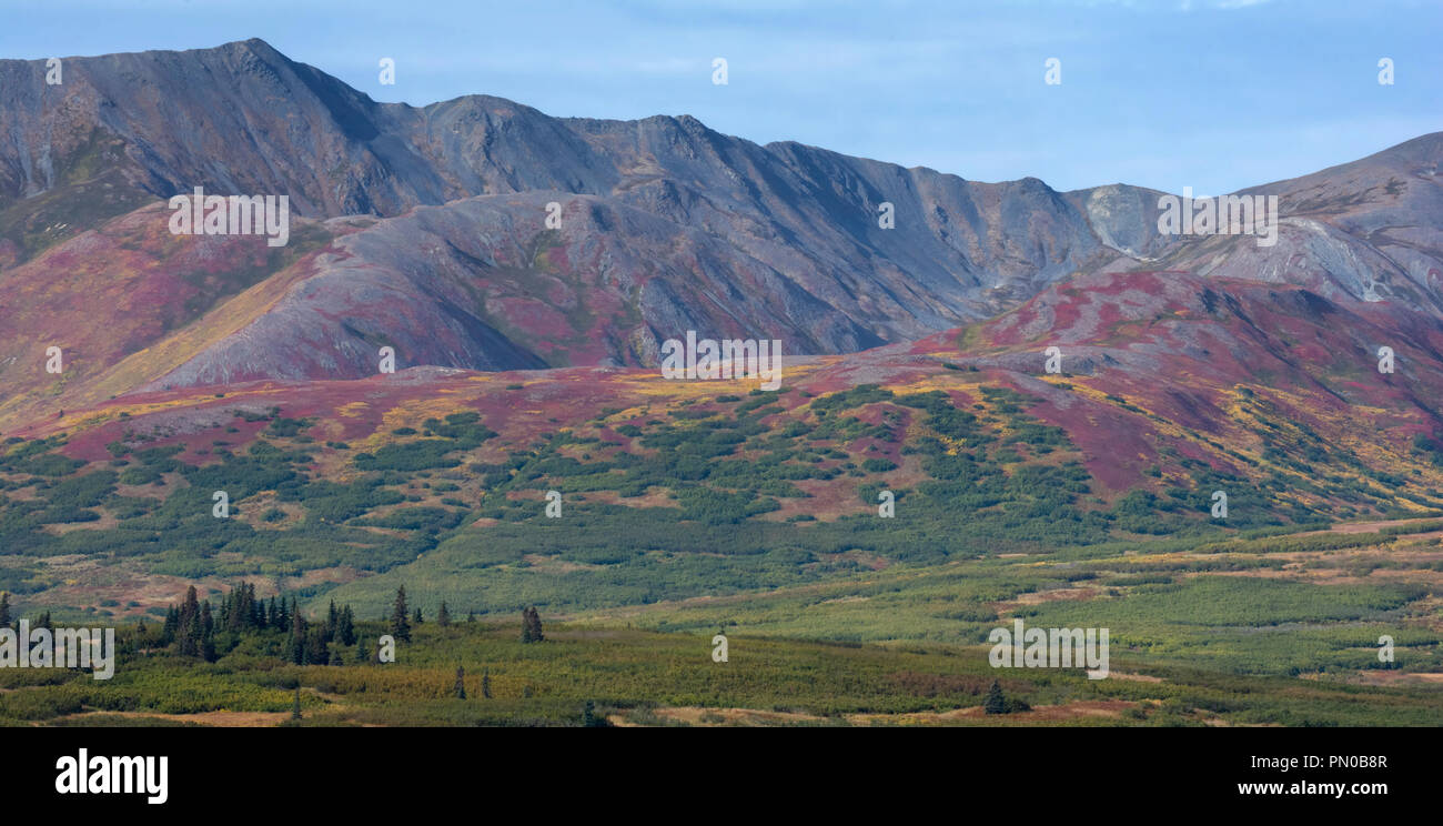 Fall colors blanket the steep sides of an Alaskan foothill as the various vegitation change colors. - Stock Image