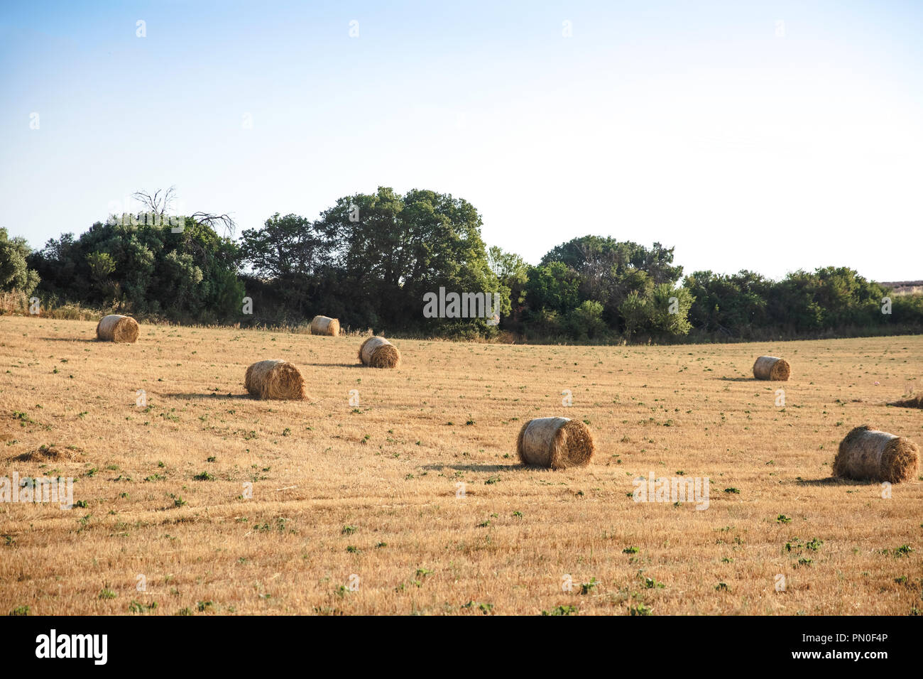 dry hay bales on agricultural field at provence, france Stock Photo