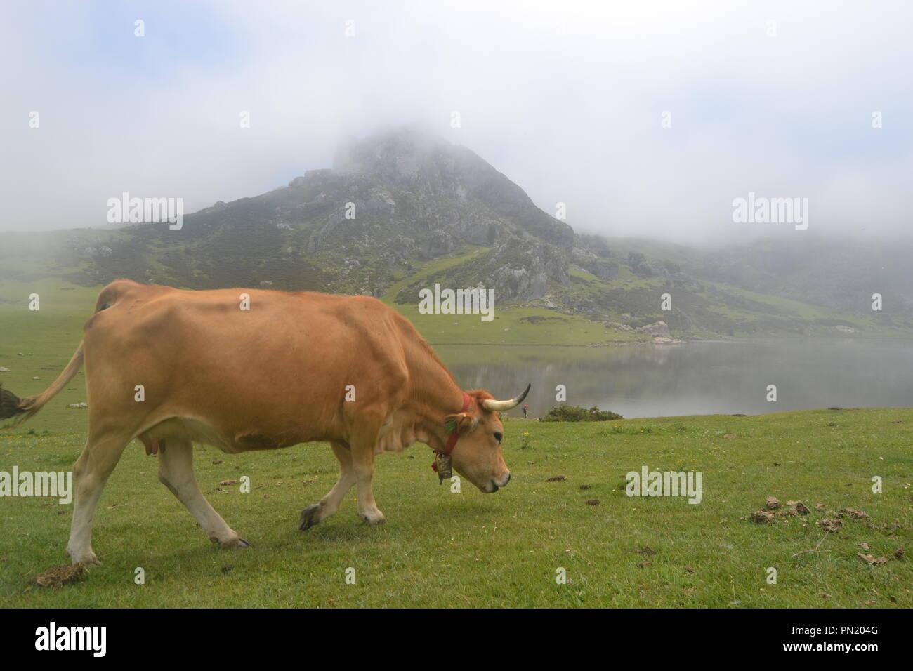 Foto tirada nos lagos de Covadonga . Imagem de sorte pois praticamente neste local esta sempre nevoeiro e não se consegue ver nada ...5 minutos . - Stock Image