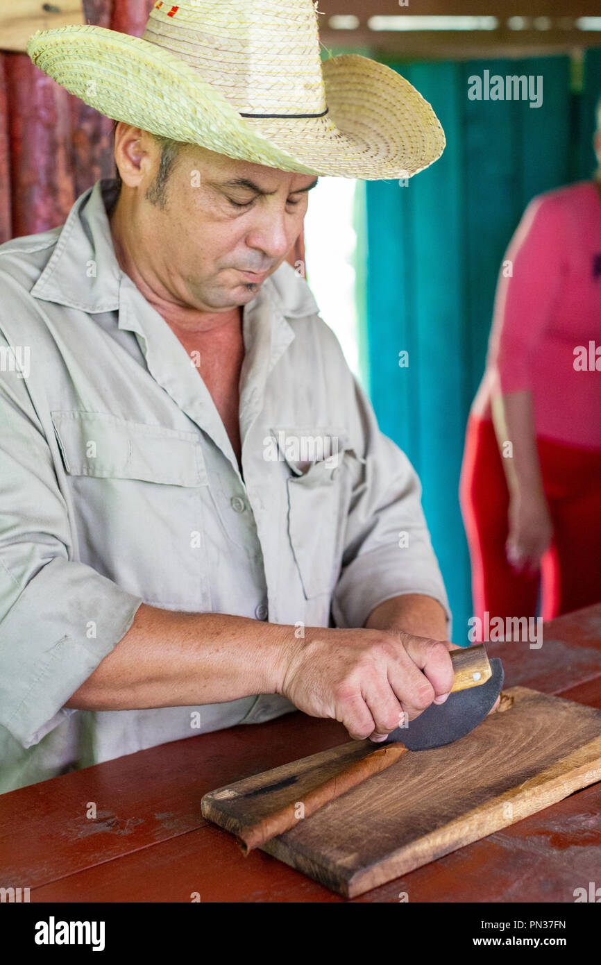 Cuban man hand rolling cigars, Tobacco tourism in Vinales, Cuba - Stock Image