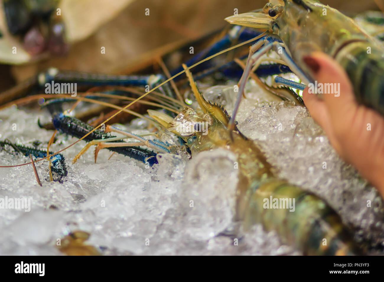 Extra large size of giant malaysian prawn (Macrobrachium