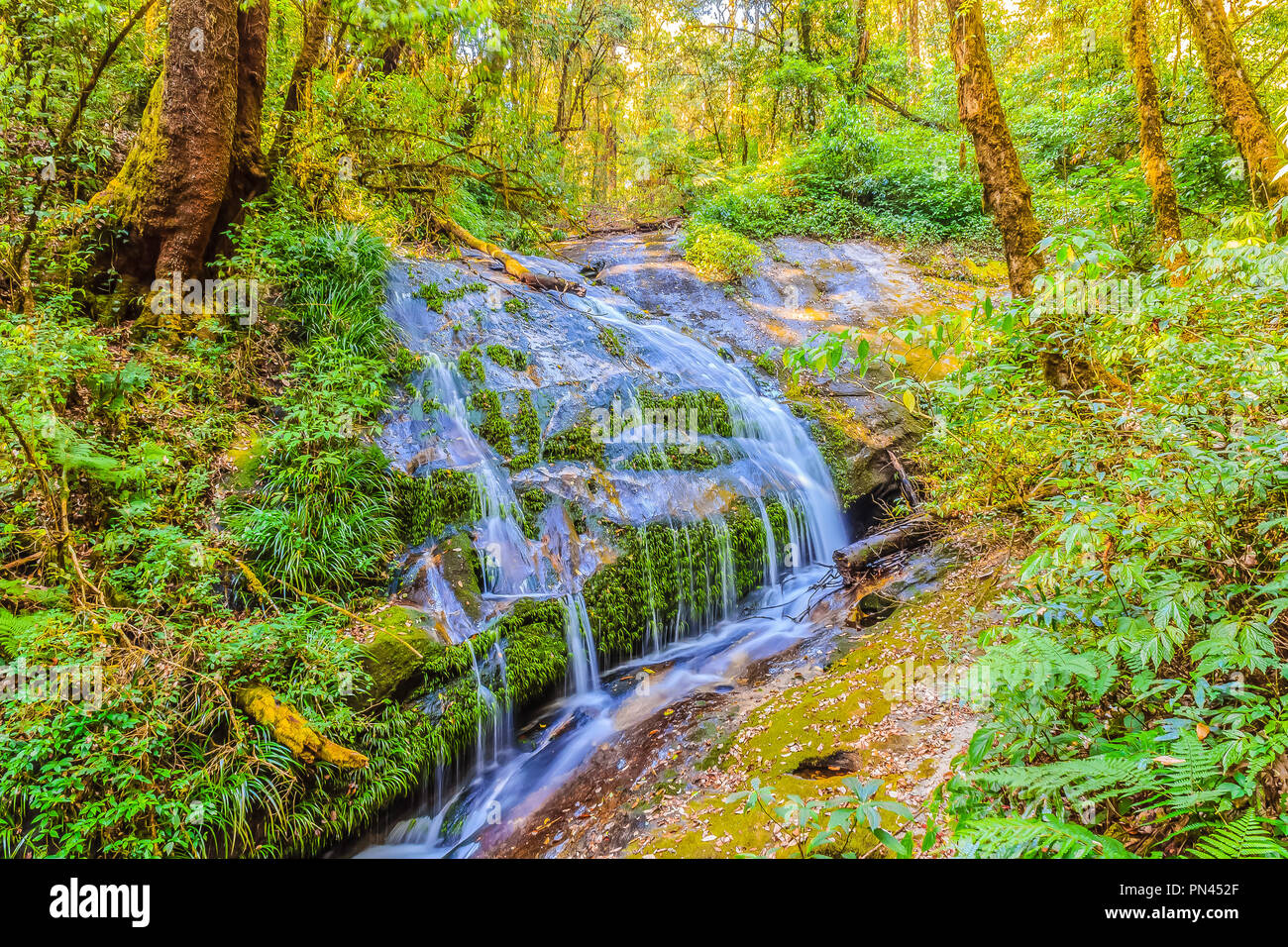 Peaceful tropical forest with small tranquil waterfall at Kiew Mae Pan trekking route in Doi Intanon national park, Chiang Mai, Thailand. - Stock Image