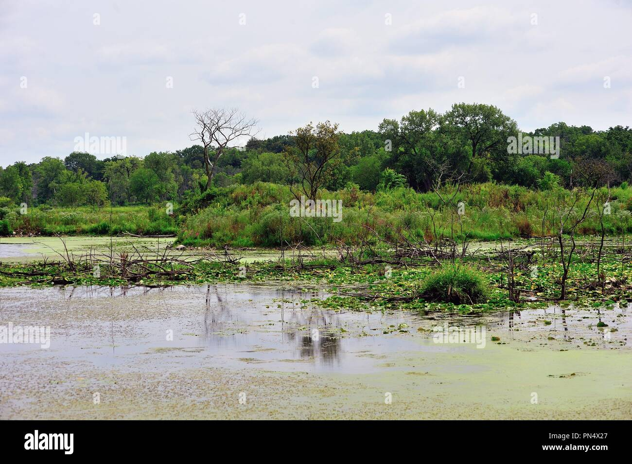 Palos Park, Illinois, USA. A sampy area within a forest preserve in suburban Chicago. - Stock Image