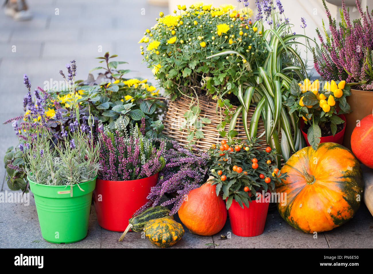 Autumn decoration with pumpkins and flowers on a street in a European city. Harvest of pumpkin. Stock Photo