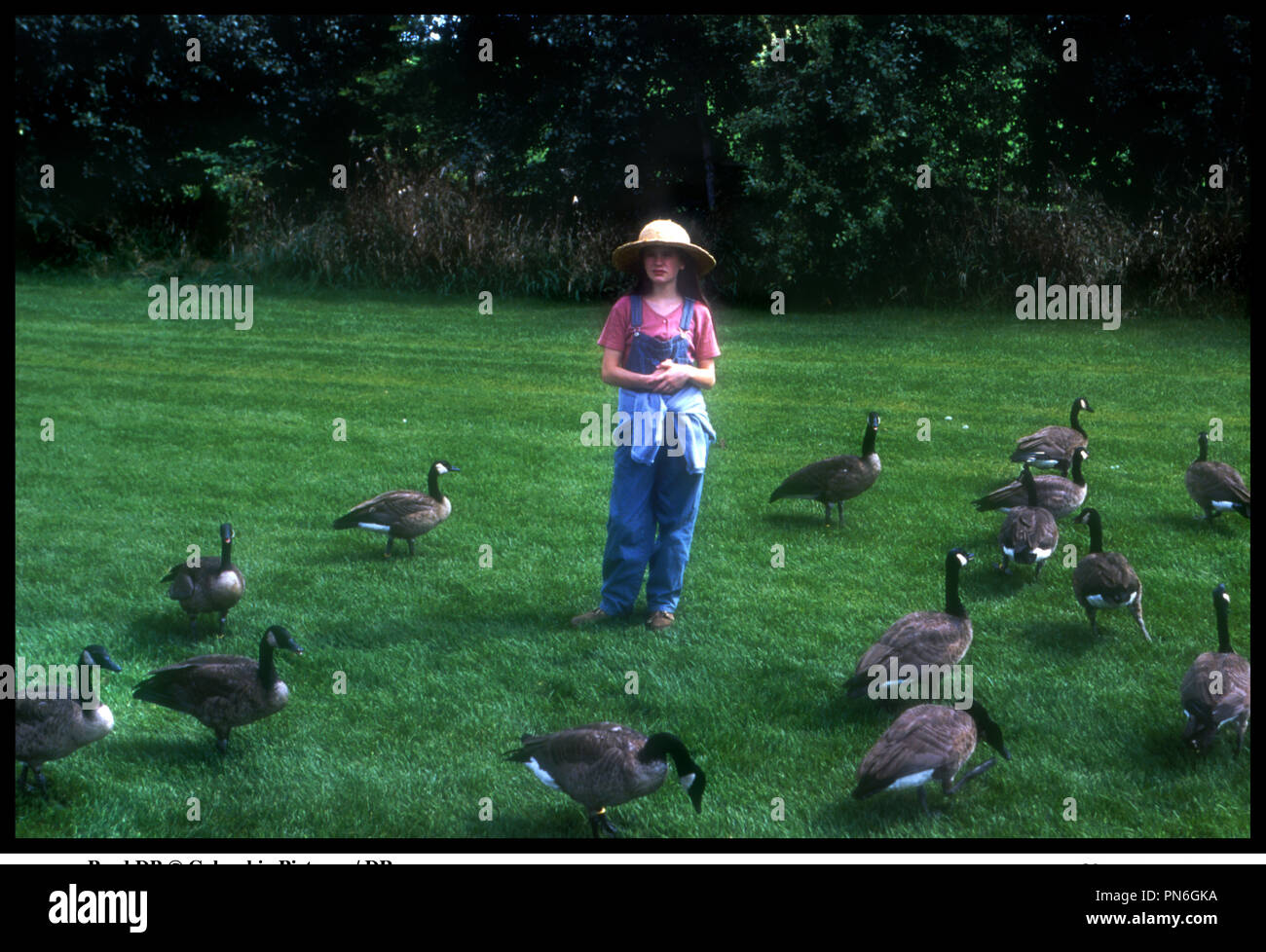 fly away home 1996 anna stock photos fly away home 1996 anna stock images alamy. Black Bedroom Furniture Sets. Home Design Ideas