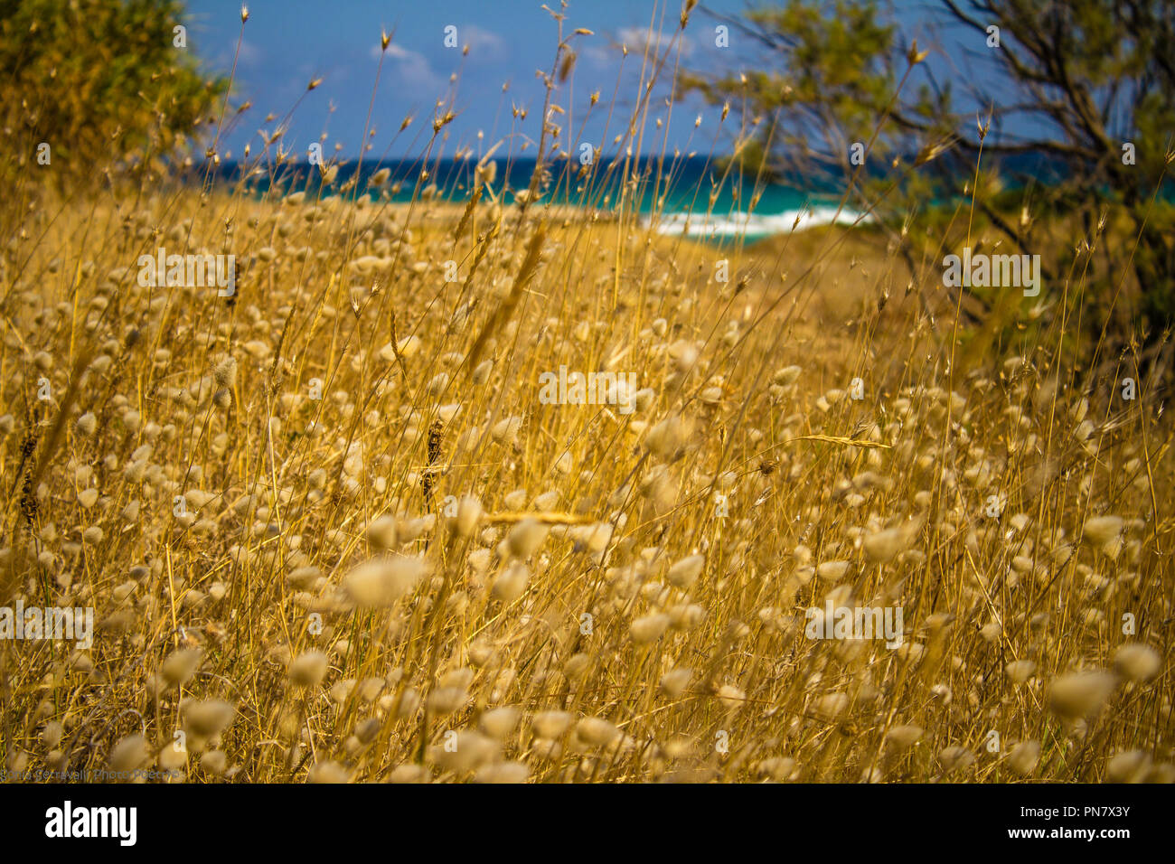 A day between countryside and sea in Apulia - Stock Image