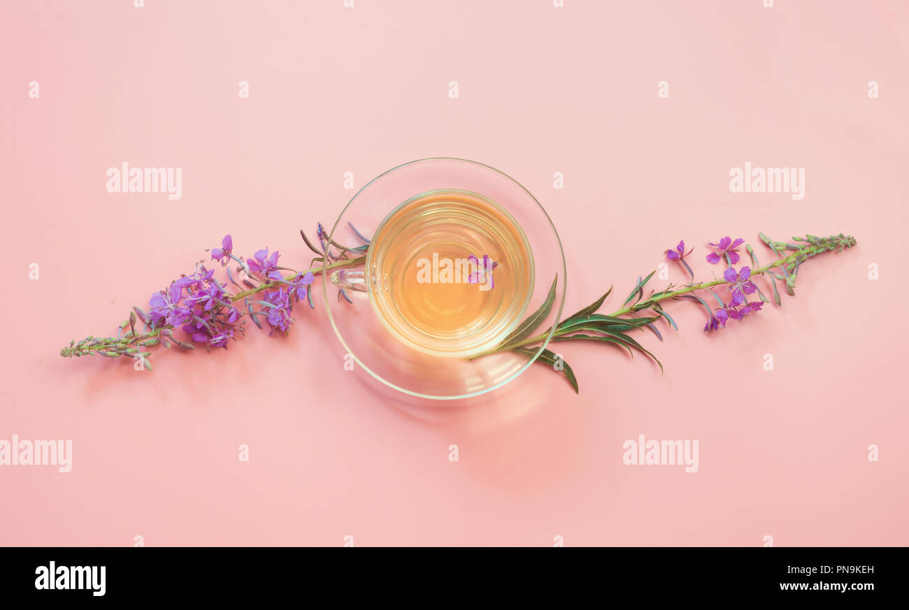 Blooming Sally flowers and cup of herbs tea on pink. Top view and concept. Copy space. Stock Photo
