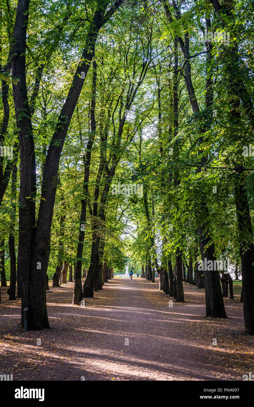 Tree avenue, Royal Palace Park, Oslo, Norway - Stock Image