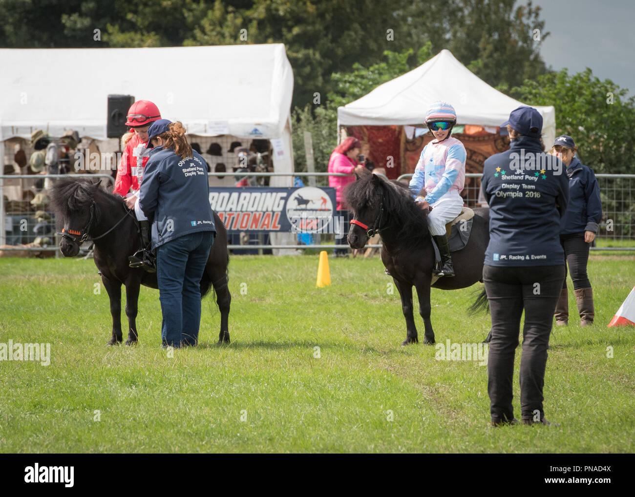 Cheshire Country Fair 2018 - Shetland Pony Racing - Stock Image