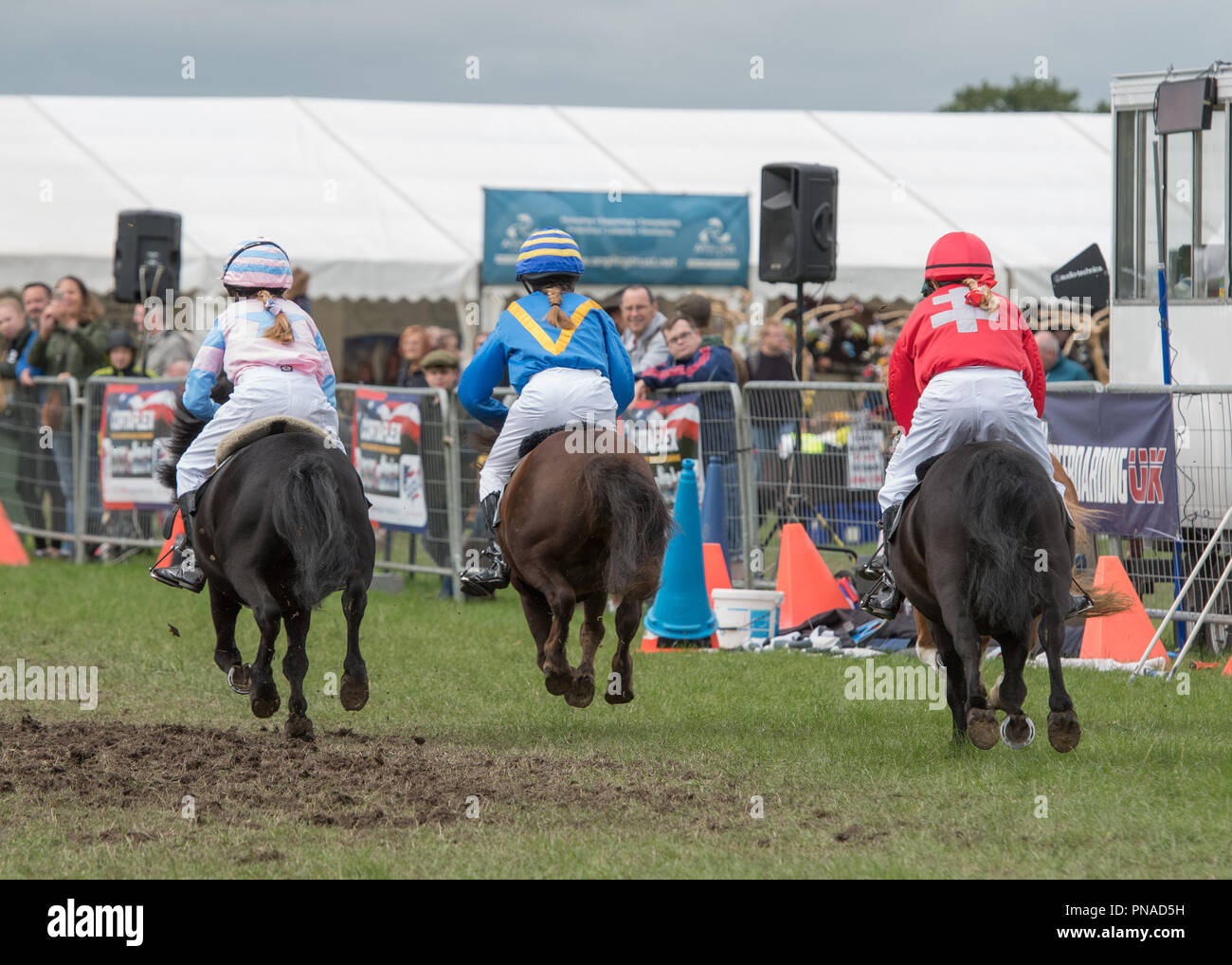 Cheshire Country Fair 2018 - Shetland Pony Racing Stock Photo