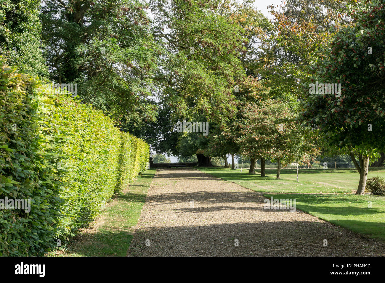 Tree lined drive in the grounds of Weston Hall, the country seat of the famous literary Sitwell family; Northamptonshire, UK - Stock Image