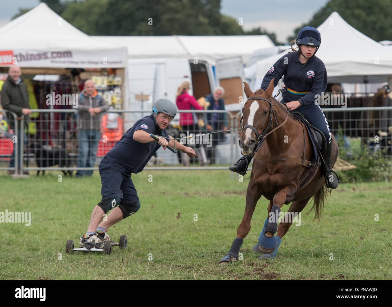Cheshire Game & Country Fair 2018 - Horse Boarding - Stock Image