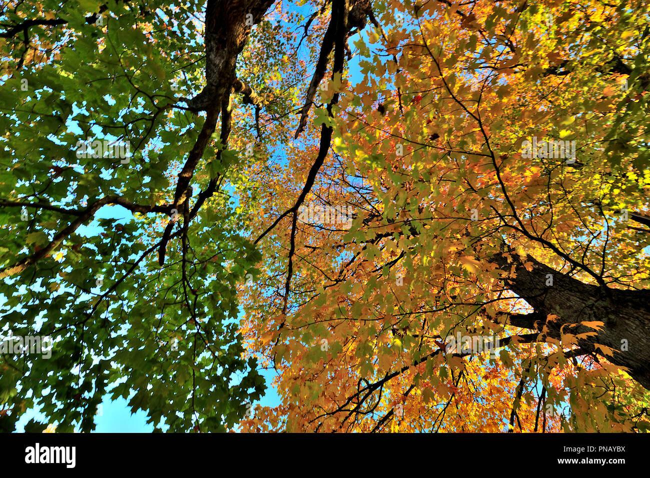 Canada Maple Autumn Landscape Stock Photos Amp Canada Maple