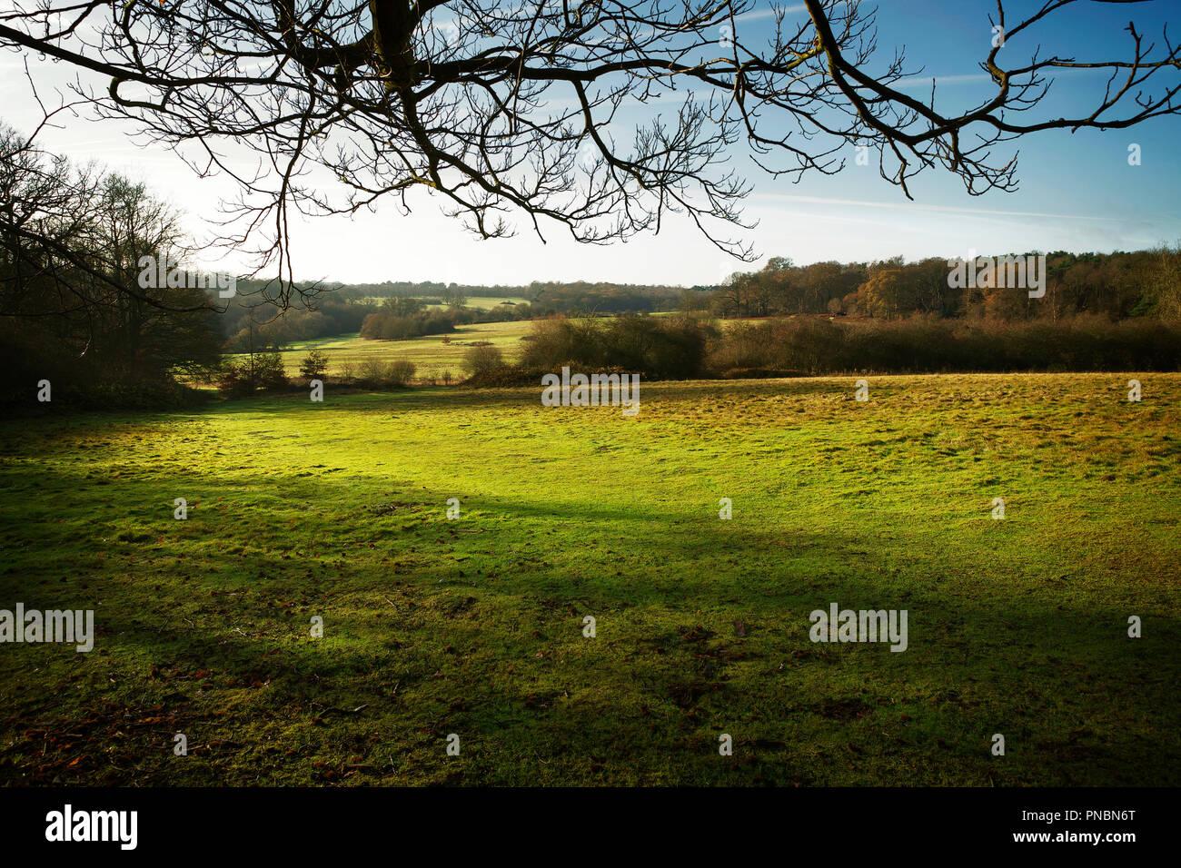 Autumn view of Trent Park, London UK. - Stock Image