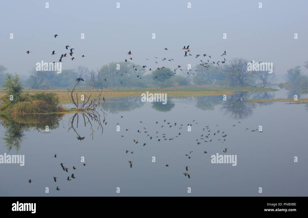 Bharatpur Bird Sanctuary (Rajasthan - India) - Stock Image