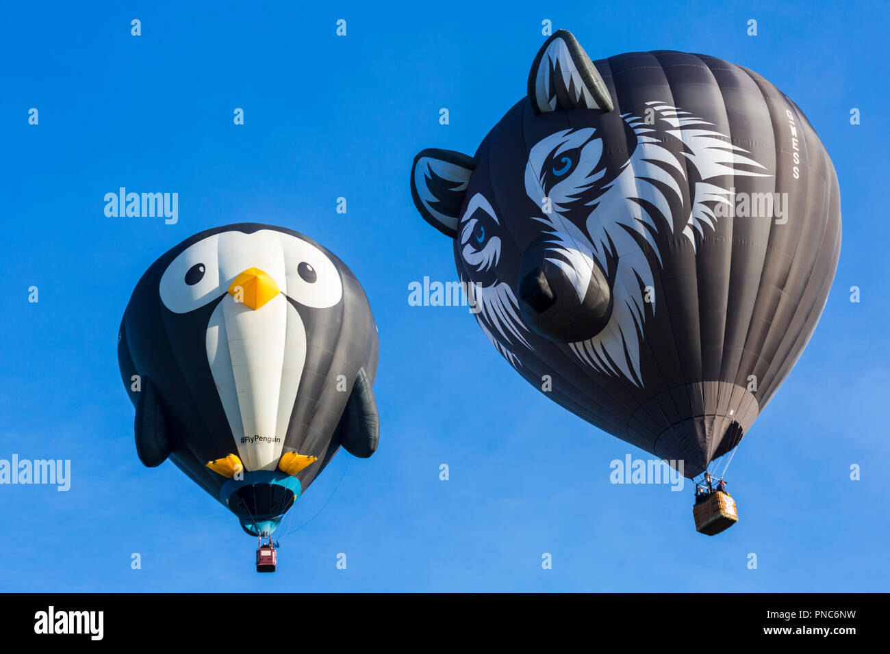 Longleat penguin hot air balloon and Wes the Wolf hot air balloon in the sky at Longleat Sky Safari, Wiltshire, UK in September - Stock Image