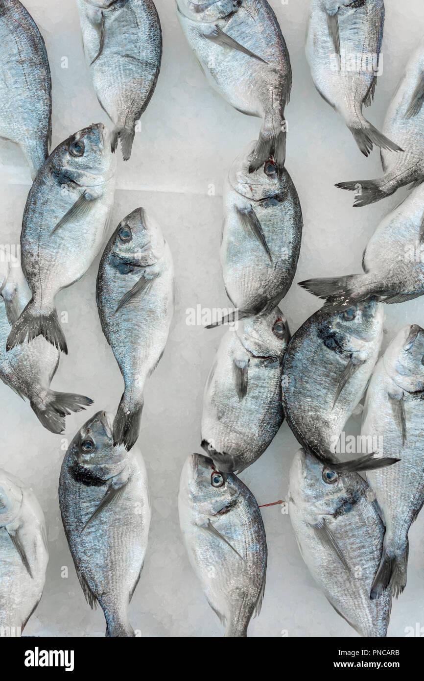 Fresh sea fish on ice at the italian market in Naples Stock Photo