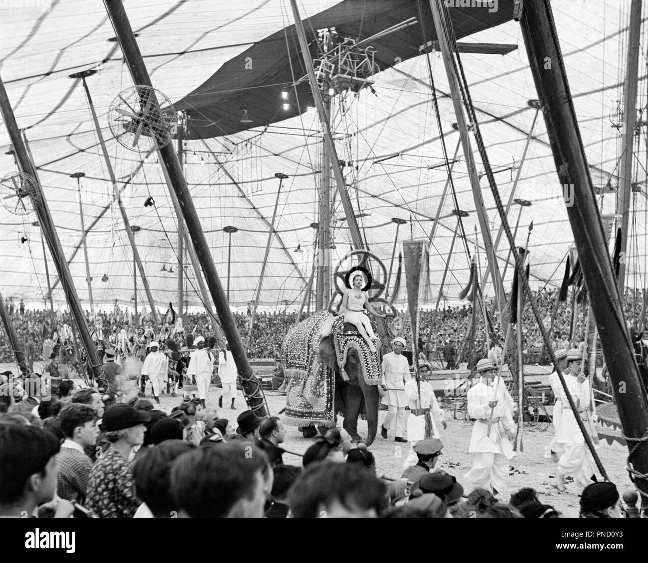 1930s 1940s 1950s INTERIOR OF BIG TOP CIRCUS TENT SHOWING AUDIENCE WATCHING PERFORMERS AND ELEPHANTS PARADE AROUND THREE RINGS - c7668 HAR001 HARS RINGS FULL-LENGTH LADIES PERSONS INSPIRATION MALES TEENAGE GIRL TEENAGE BOY ENTERTAINMENT B&W POLES PERFORMING ARTS DREAMS HAPPINESS ADVENTURE CANVAS PERFORMER STRENGTH AND ELEPHANTS EXCITEMENT LOW ANGLE RECREATION OF ENTERTAINER OCCUPATIONS ROPES IMAGINATION STYLISH ENTERTAINERS PERFORMERS RELAXATION THREE RING BIG TOP BLACK AND WHITE HAR001 OLD FASHIONED - Stock Image