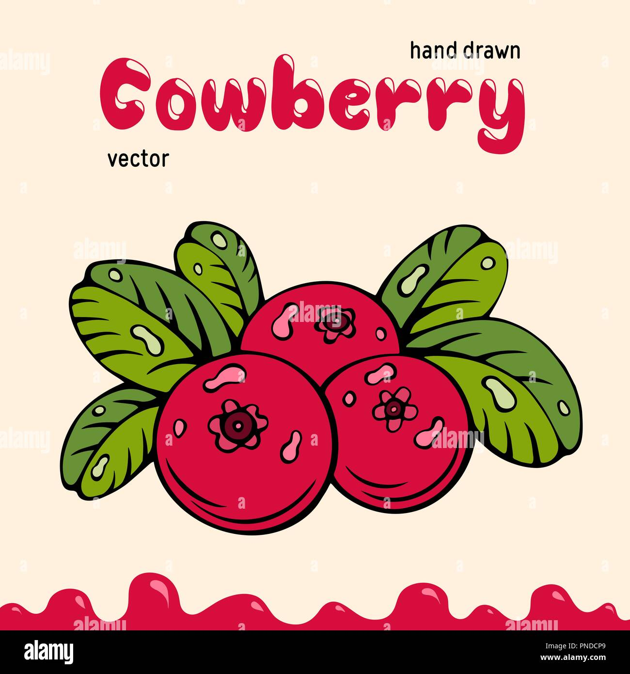 Cowberry vector illustration, berries images. Doodle cowberry vector illustration in red and green color. Cowberry berries images for menu, package de - Stock Vector