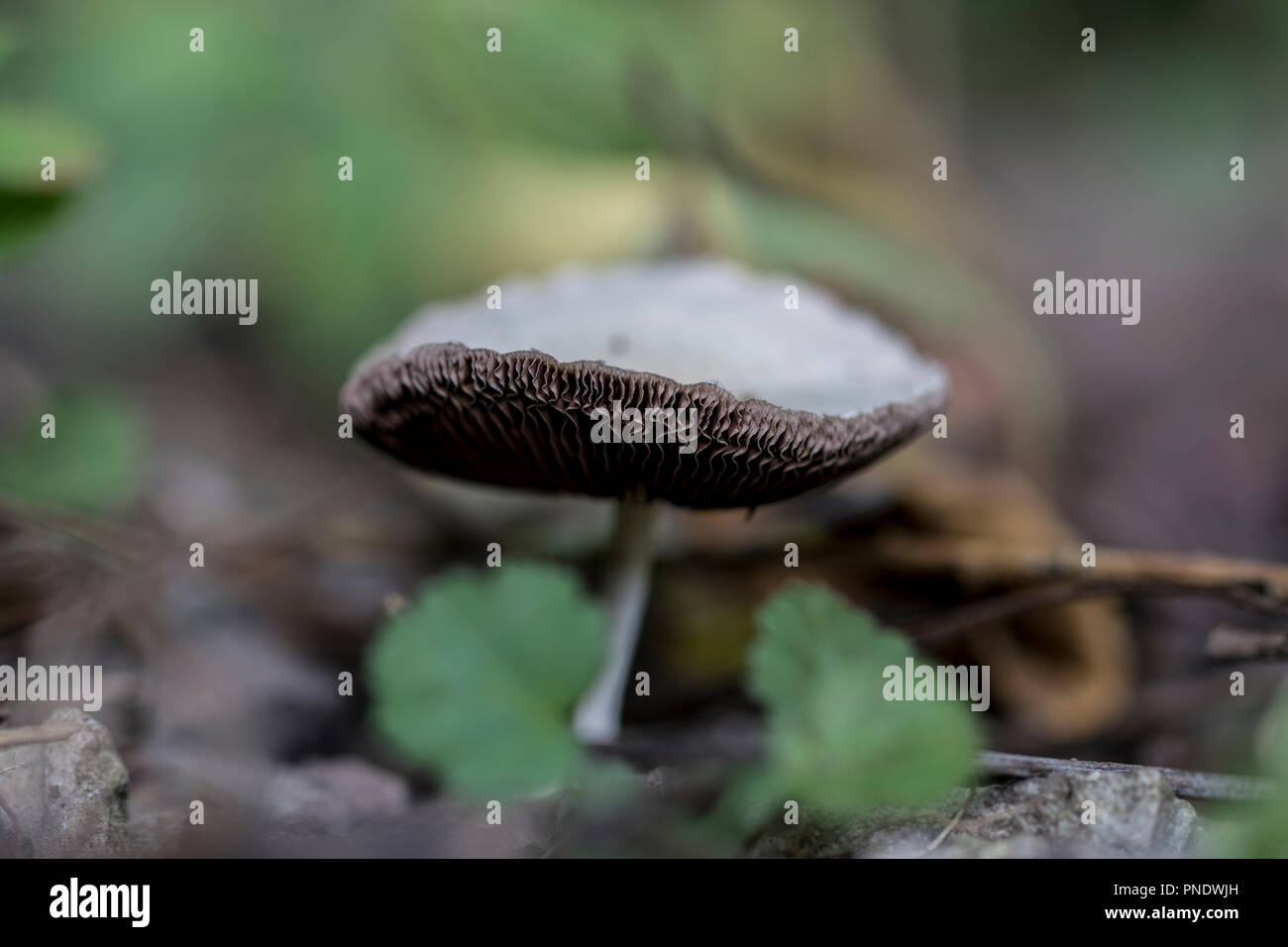 Lonely mushroom in the forest. Close up of a toadstool helping the process of natural decomposition. Powerful microorganisms. - Stock Image