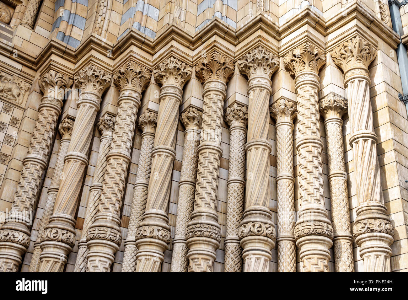 London England Great Britain United Kingdom Kensington Natural History Museum exterior Romanesque architecture facade detail ornate columns pillars Al - Stock Image