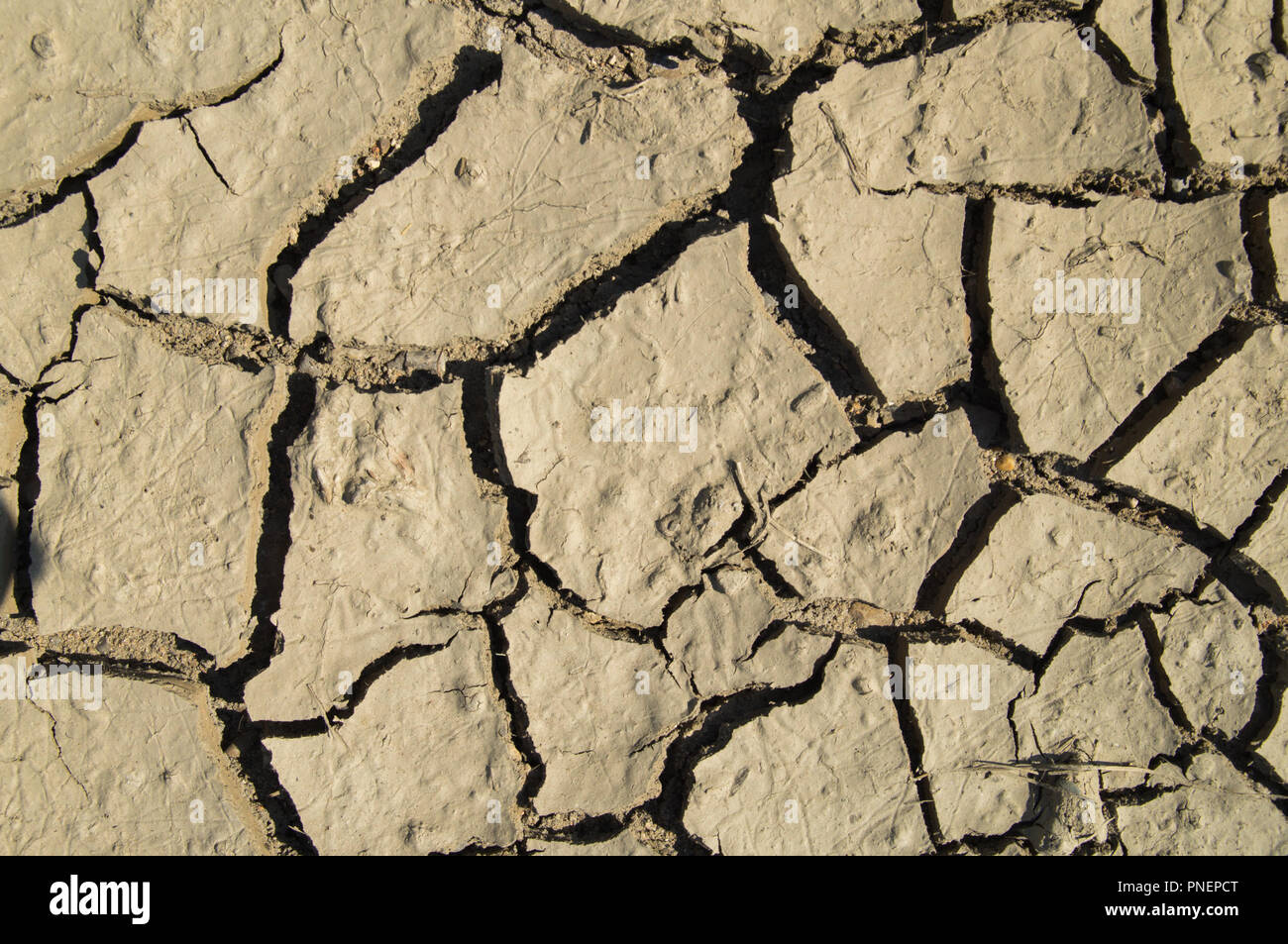 PATCH OF LAND OF DRY GROUND SHOT STRAIGHT FROM ABOVE - Stock Image