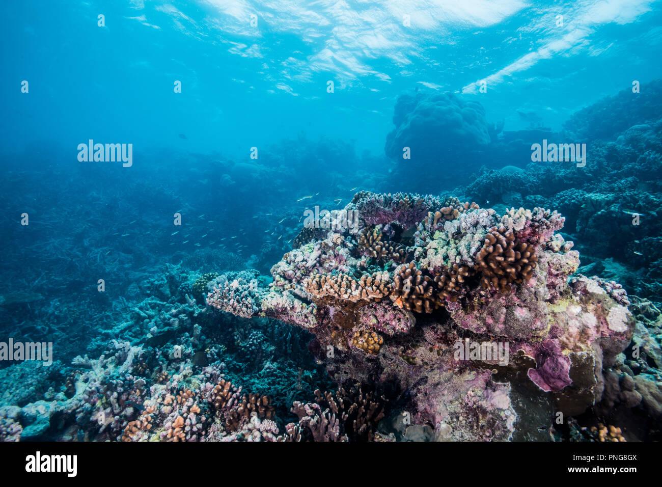 Reef scene Yap Island Federated States of Micronesia - Stock Image