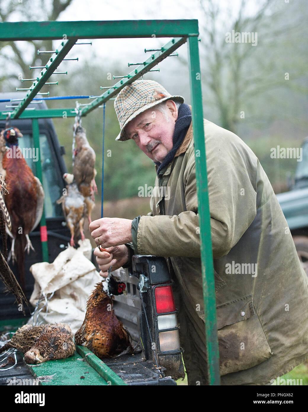 man hanging shot pheasants on game cart - Stock Image