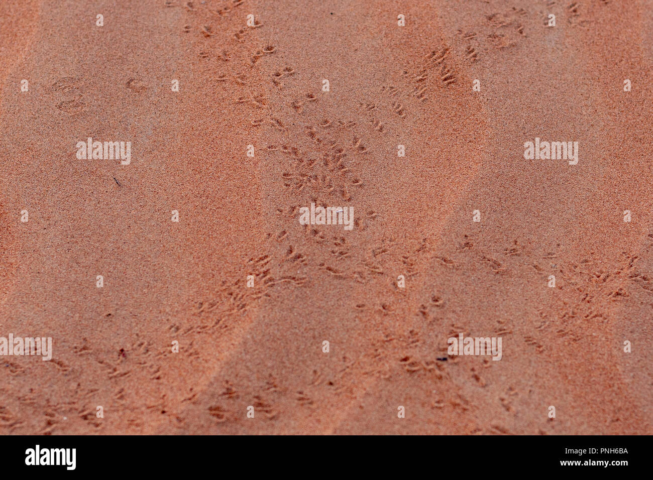 A Close-up of Footprints in the Desert Sand - Stock Image