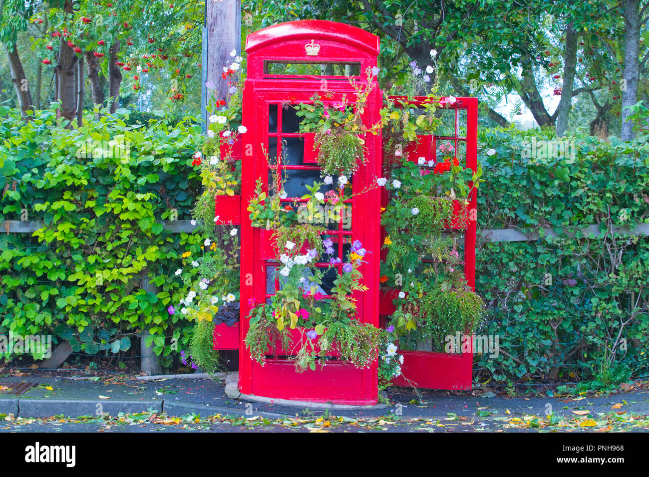 A Red UK Telephone Box that has been converted into a planter - Stock Image