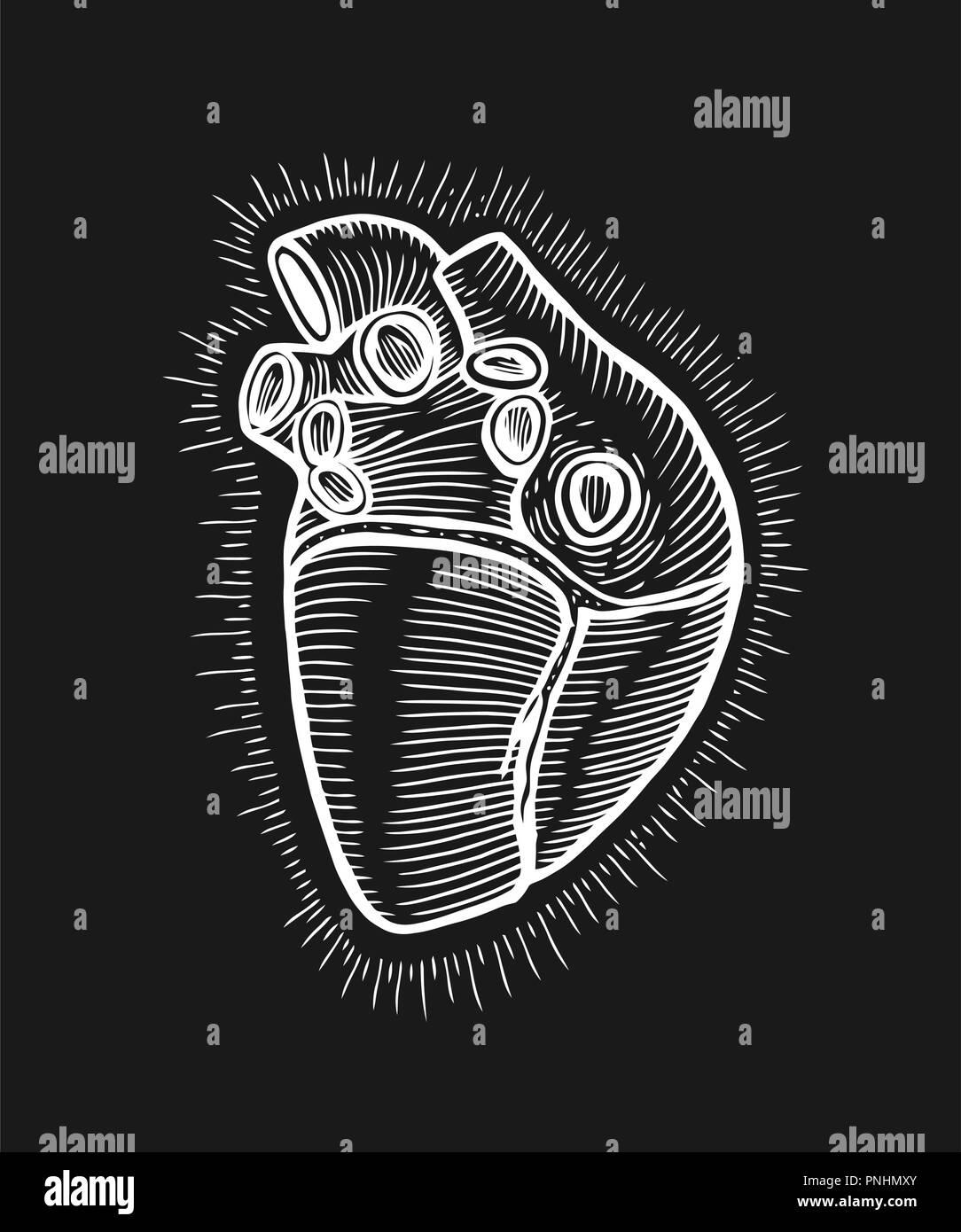 Hand Drawn Human Heart With Sunburst Anatomically Correct Art Flash Tattoo Or Print Design Vector Illustration Stock Vector Image Art Alamy