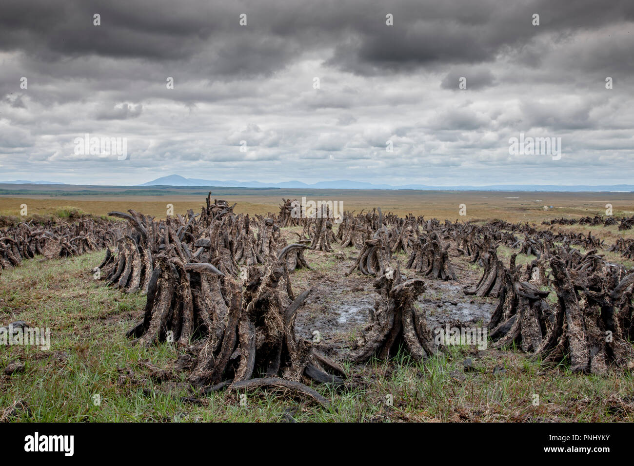 County Sligo, Sligo, Ireland. 13th August, 2009. Sods of Turf drying in the summer in a bog in County Sligo, Ireland. - Stock Image